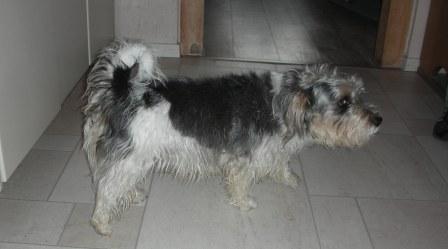 CaninCare.Hund1