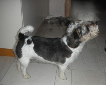CaninCare.Hund2