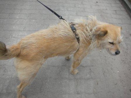 CaninCare.Lilli1