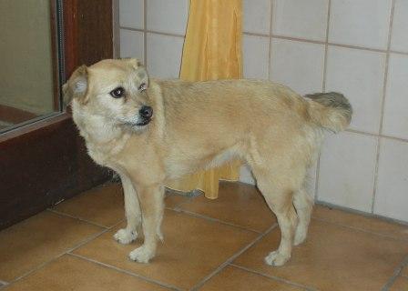 CaninCare.Lilli2
