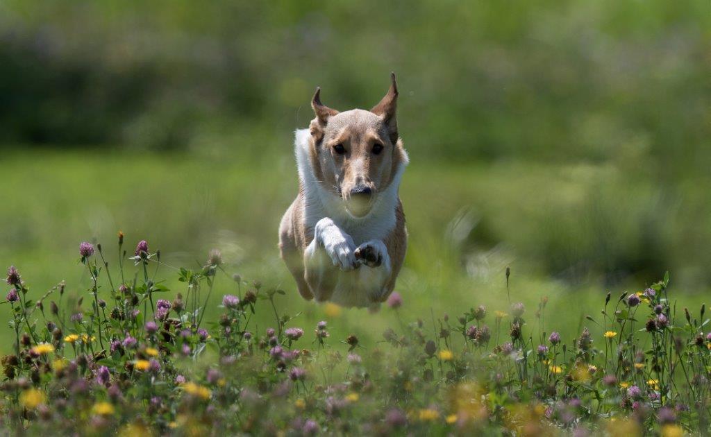 CaninCare_A grouß Gängla