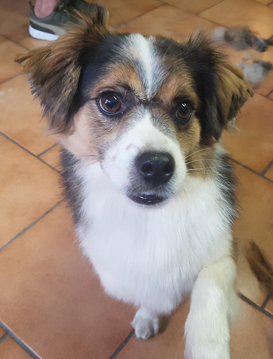 hundefriseur-mittelfranken-canincare