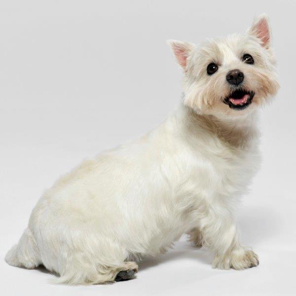 Hundeerziehung Mittelfranken - CaninCare Ihr kompetenter Ansprechpartner