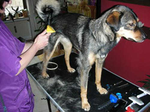 Haarige Infos zur richtigen Fellpflege Ihres Hundes